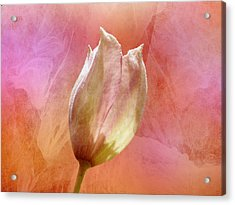 Clematis Opening Acrylic Print