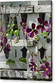 Clematis  Acrylic Print by Scott Kingery