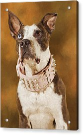 Acrylic Print featuring the photograph Cleopitra  by Brian Cross
