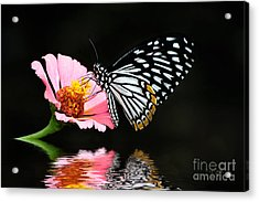 Cliche Acrylic Print by Lois Bryan