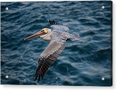 Cliff Cruising Acrylic Print by Sonny Marcyan