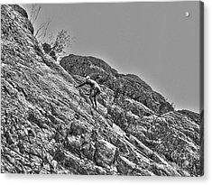 Climbing Acrylic Print by Christian Jansen