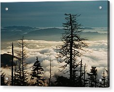Clingman's Dome Sea Of Clouds - Smoky Mountains Acrylic Print