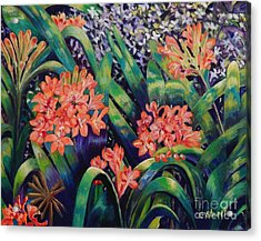 Clivias In Bloom Acrylic Print by Caroline Street