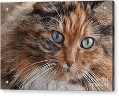 Cloe Kitty Acrylic Print