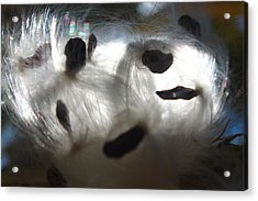 Acrylic Print featuring the photograph Close Cotton by Alicia Knust