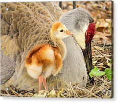 Close To Mother Acrylic Print by Zina Stromberg