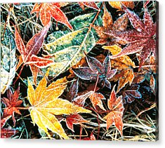 Close Up Fallen Maple Leaves Acrylic Print