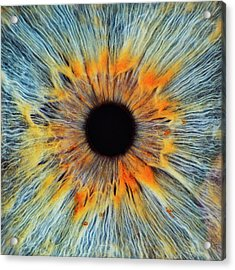 Close-up Of A Human Eye, Pupil And Iris Acrylic Print by Dimitri Otis