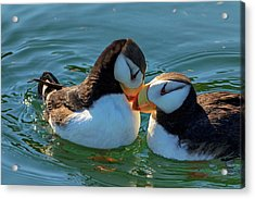 Close Up Of A Pair Of Horned Puffins Acrylic Print by Marion Owen