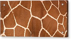 Close-up Of A Reticulated Giraffe Acrylic Print by Panoramic Images