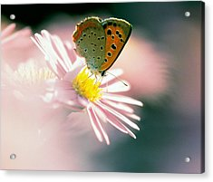 Close Up Of Butterfly On Flower Acrylic Print by Panoramic Images