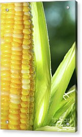 Close-up Of Corn An Ear Of Corn  Acrylic Print by Sandra Cunningham