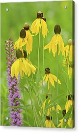 Close-up Of Flowers Blooming Acrylic Print by Panoramic Images