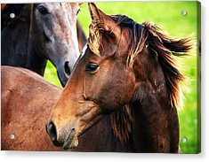 Close-up Of Horses Acrylic Print by Jan Brons