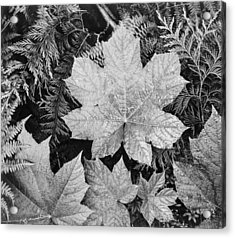 Close Up Of Leaves Acrylic Print