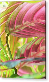 Close-up Of Pink And Green Tropical Acrylic Print