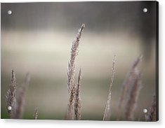 Close-up Of Plant Acrylic Print by Paulien Tabak / EyeEm
