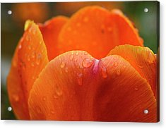 Close-up Of Rain Droplets On Orange Acrylic Print