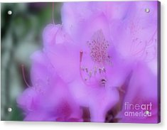 Close Up Of Rhododendron Flower Acrylic Print by Dan Friend