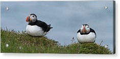Close-up Of Two Atlantic Puffins Acrylic Print by Panoramic Images
