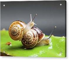 Close Up Of Two Snails Matting Acrylic Print by Ozgur Donmaz