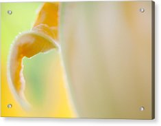 Close-up Of Yellow Plant Acrylic Print by Paulien Tabak / EyeEm