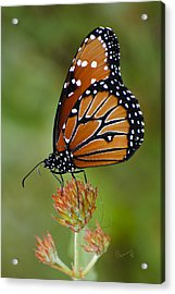 Close-up Pose Acrylic Print by Penny Lisowski