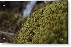 Close Up Acrylic Print by Riley Handforth