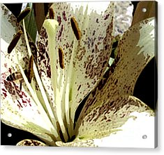 Close Up With Bee Detail 1 Acrylic Print by Bruce Tubman