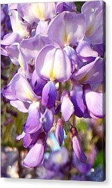 Closer Look Wisteria Acrylic Print by Virginia Forbes