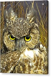 Closeup Of A Great Horned Owl Acrylic Print