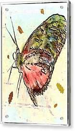 Cloud Butterfly Acrylic Print by Jill Balsam