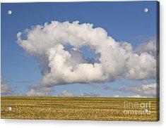 Cloud Acrylic Print by David Davies