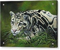 Clouded Leopard Acrylic Print by Heather Bradley