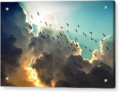 Clouds And Birds Acrylic Print by Dorothy Walker