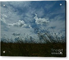 Clouds And Grass Acrylic Print by Tim Good