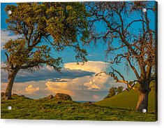 Clouds Between Trees Acrylic Print by Marc Crumpler
