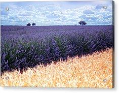 Clouds Over Lavender Plantation Acrylic Print