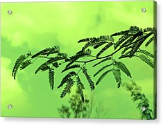 Cloudy Green Nature Acrylic Print by Deepti Chahar