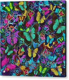 Cloured Butterfly Explosion Acrylic Print by Alixandra Mullins