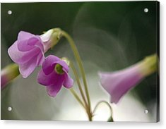 Clover Bells Acrylic Print by Greg Allore