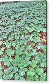 Clover Acrylic Print by Jane Linders