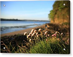 Clover Acrylic Print by Maeve O Connell