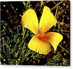 Club Flower Acrylic Print by Tim Rice