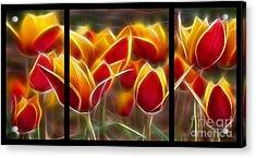 Cluisiana Tulips Triptych  Acrylic Print by Peter Piatt