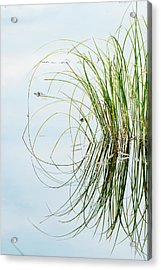 Clump Of Grass Reflected On Red Jack Acrylic Print