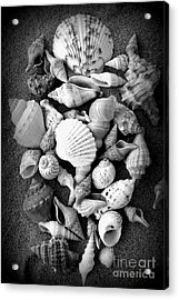 Cluster Of Shells Acrylic Print by Diane Reed