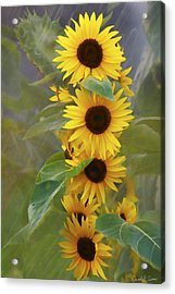 Cluster Of Sunflowers Acrylic Print
