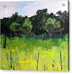 Clusters Of Black-eyed Susans Acrylic Print by Charlie Spear
